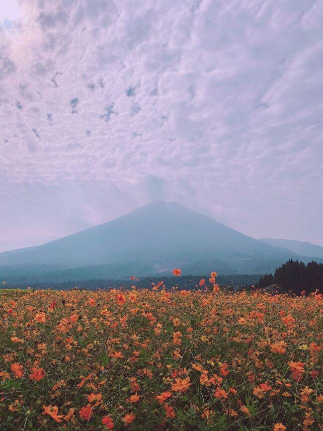 まとまった時間が出来たので、この期にGoToトラベルキャンペーンを使ってこれまで行ったことない都道府県を一気に回る計画を立てました。というわけで、今回白地図を埋めるのは九州。九州は過去3回訪れていますが福岡、長崎、佐賀しか上陸していないので残りを全て潰しに行きます。これを達成すると47都道府県で残るは秋田のみになります(旅行として訪れてないとか昔過ぎて旅行記が書けないとかで、4トラ的にはまだ埋まってない所もあります)。<br /><br />まとまった時間が出来たと言っても限りはあるので、大分、宮崎、熊本、鹿児島の4県を1週間で駆け抜けるという毎度の如く鬼スケジュールに。<br /><br />今回の九州旅の計画を立てていた際、目に留まったのが「宮崎県小林の生駒高原にあるコスモス畑」でした。見頃は10月中旬&#12316;下旬、これ、ギリギリ行けるんじゃ?と思ったので小林に滞在することにしました。しかしホームページで開花情報見ているとだんだん下火になっていく…でもまあ、この時期にここに来るって今後あるかもわからないから、行っておこう。<br /><br />生駒高原、小林駅からバスで行けるらしいのですがメインの路線バスが運休中らしく、現在は小林市コミュニティバス「おうらい」というのが週3回、1日往復3便ずつ出ているのみ。そのため小林滞在日が限られてしまい、おのずと前後の予定も限定されてしまいました。<br /><br />今回の旅はなるべくお得に移動するためにフリーパスなども調べていたのですが、意外と使えるものがありませんでした。唯一導入したのが、サンキューパスというバスのフリーパス。九州のバスや一部のフェリーが乗り放題になるチケットで、九州全土で使えるものや上半分、下半分だけ使えるものが出ています。移動手段を調べて、宮崎県滞在の3日間がバス移動が多く元が取れそうだったので、この3日間で南九州3日間8000円のチケットを使用。ウェブチケットを運転手に見せれば乗れるのですが、このチケット画面の出し方がちょっとわかりづらいのと、時間が経つとログアウトしちゃうのでその都度読み込むのに時間がかかるのが難点。<br /><br />今回の旅程<br />10月24日 自宅→成田<br />10月25日 成田→福岡→熊本→阿蘇<br />10月26日 阿蘇→熊本→鹿児島<br />10月27日 鹿児島→桜島→鹿児島→小林<br />10月28日 小林 ★いまここ →宮崎<br />10月29日 宮崎→日南→宮崎→延岡<br />10月30日 延岡→高千穂峡→延岡→別府<br />10月31日 別府→福岡→成田<br />11月1日 成田→新宿→自宅