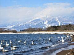 2021年栃木県にも緊急事態宣言が出ていますが、雪の中猪苗代湖の白鳥に会いに行きました。