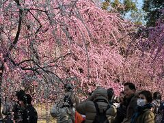 京都観梅の旅