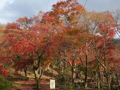 2020 「THE HIRAMATSU 京都」に泊まって晩秋の古都めぐり♪ 3日目 大原・八瀬