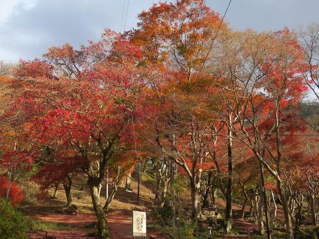 晩秋の古都めぐり最終日は薄曇りの天気のなか、大原の里を歩いて寂光院と<br />三千院の広い境内、磨かれた机のリフレクションで人気の八瀬瑠璃光院、<br />こじんまりと落ち着いた雰囲気の蓮華寺で名残りの紅葉を楽しんでから、<br />京都駅の近くで地域共通クーポンを使ってお土産を購入して東京に戻り<br />ました。<br /><br /><br />[観光したコース]<br /> <br />11月29日  東福寺~雲龍院~今熊野神社<br /><br />11月30日  鈴虫寺(華厳寺)~渡月橋~天龍寺~大河内山荘~<br />      常寂光寺~二尊院~廣隆寺 <br /><br />12月1日 寂光院~三千院~瑠璃光院~蓮華寺