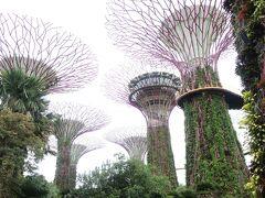 五度目のシンガポール(2)初めてのガーデンズバイザベイ