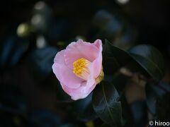 東山動植物園の春の兆し