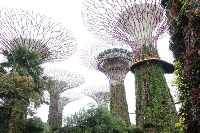 2年ぶりに訪れたシンガポール。今回で五度目の訪問となりました。滞在期間は1週間ありましたので、これまで行ったことのなかったエリアや観光スポットを訪問してみました。今回は初めてガーデンズ・バイ・ザ・ベイに行ってきました。近未来的な植物園で昔訪れたボタニカル・ガーデンとは対極にあるような植物園でした。