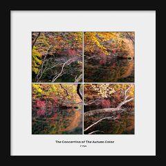 ◆秋彩のコンチェルト♪水鏡の滑川砂防ダム 1
