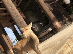 奈良の古都に導かれて、ほっこり日帰りパワースポット巡り