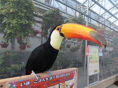 GoToトラベルで奥湯河原から掛川へ ☆ (4)密を避けて鳥とたわむる 掛川花鳥園へ