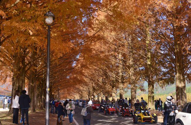 午前中、かめおか霧のテラス、廻り田池を巡った後、<br />メタセコイア並木の紅葉を目指すも、手前2kmから大渋滞!<br />並ぶこと30分、ようやく、駐車場(無料)へ。 <br /><br />天候にも恵まれ、大勢の観光客が訪れていました。 <br />10月に、メタセコイア並木を訪れた時は、緑の葉が茂っていましたが、本日は見事なまでの紅葉です。<br /><br />メタセコイア並木の紅葉を楽しんだ後、友人お勧めのコーヒーショップ・葉山珈琲へ。<br />ここも、大変な混みようでした。<br />入口で名前を記入して、待つこと1時間、ようやく、店内へ。<br /><br />・メタセコイア並木<br /> 約2.4kmに約500本が並ぶ並木道。春は芽吹き・新緑、夏は深緑、秋は紅葉、冬は雪景色と四季折々に見せる美しい景観は訪れる人々を魅了します。隣接する農業公園マキノピックランドでは1年を通して果物等の収穫体験ができます【びわ湖高島観光ガイドより】<br /><br />・メタセコイア並木についてはこちら<br />    https://takashima-kanko.jp/spot/metasequoia.html