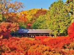 もみじ色づく秋真っ盛りの京都へ小旅行☆1日目