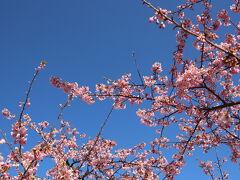 ビバ!ご近所☆(≧∀≦)☆~近場で楽しむ河津桜2021~