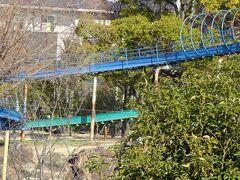 豊中市の羽鷲池近くに咲くミモザを見に行きました その3。