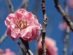 高速バスで甲府へ◇連歌発祥の地・酒折宮を参拝し、不老園で梅を愛でる