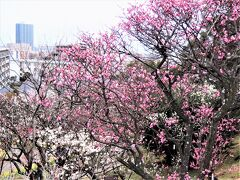 2021年2月、神戸の春の花を観にでかけます!