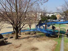 豊中市の羽鷲池近くに咲くミモザを見に行きました その4完。