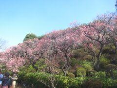 春近し 今日も陽気が良いので、池上梅園・池上本門寺へ行ってみました