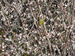 国東半島の中心にある「梅園の里」は名前の通り沢山の梅の花が咲き誇りとても綺麗な場所でした。☆(^0^)☆