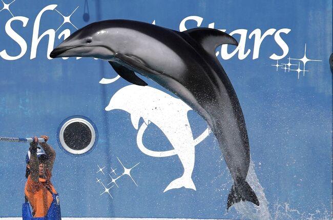 2020年3月31日で閉園するみさき公園(の動物園・水族館)と、大規模リニューアルに伴う改装工事前の京都水族館へ行ってきました。<br /><br />新型コロナウイルスの影響で、みさき公園は3月の大部分が臨時休園。最後の1週間はイベント中止など制限がある中での開園でした。閉園間際の混雑を避け早めの時期に行ったのが功を奏したものの、複雑な気持ちです。<br />もともと旅行記にする予定はなくて素材が少ないのですがコロナ禍前ラストの旅行としてお蔵入りから復活しました。<br /><br /><br />    0~1日目:東京→大阪→京都 →≪京都水族館≫オオサンショウウオ→海獣<br />                   (https://4travel.jp/travelogue/11668783)<br />         ペンギン→交流プラザ(https://4travel.jp/travelogue/11669310)<br />         イルカ →京都→大阪(https://4travel.jp/travelogue/11670589)<br />    2日目:≪みさき公園≫タンチョウ→ワシミミズク<br />                   (https://4travel.jp/travelogue/11672750)<br />        プレーリードッグ→マーラ<br />                   (https://4travel.jp/travelogue/11674729)<br />        ビーバー→ふれあい広場(https://4travel.jp/travelogue/11676969)<br />今ココ→    イルカショー<br />        ペンギン →大阪→京都→東京<br />                   (https://4travel.jp/travelogue/11682604)