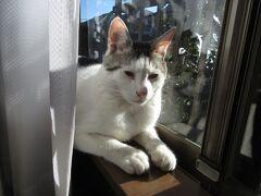 猫の日 ライムの写真60