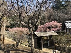 神奈川・大和の自然散策 ~ふれあいの森・泉の森~