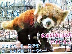 長距離ドライブで北陸信州レッサーパンダ遠征(9)茶臼山動物園(前編)レッサーパンダの森で屋外レッサーパンダに会えてリベンジ叶う【ロン哀悼】