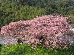 初春の静岡へ、ドライブ旅行②