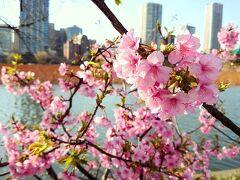 2021年2月 東京 梅と桜めぐり♪亀戸天神~錦糸公園~汐入公園~上野公園~湯島天神♪