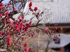 20210224-2 京都 智積院の観梅再び