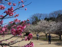 大高緑地では梅の花の競演(競艶)が最高潮です。