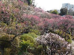 丁度梅が見頃の「池上梅園」