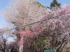 花と緑の振興センターと興禅院の梅☆2021/02/28