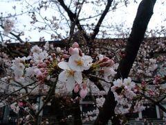 2011年4月 京都で桜まみれのお花見ウォーキング♪ヽ(´▽`)/