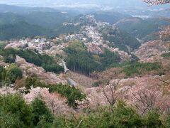 2011年4月 吉野の千本桜を観に行ってきました!