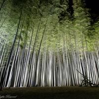 幻想的竹林のライトアップ&可憐なセツブンソウ