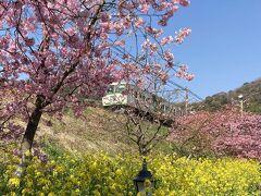 カラフル伊豆☆河津桜 菜の花 踊り子号~熱海グルメ