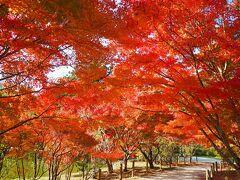 いわきの中釜戸のシダレモミジと白水阿弥陀堂の紅葉を見に出かけてきました