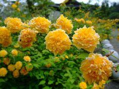 2012年5月 奈良の「花の寺巡り」リハビリウォーク