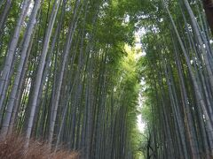 観光客が一人も居ない竹林を目指して朝の嵐山