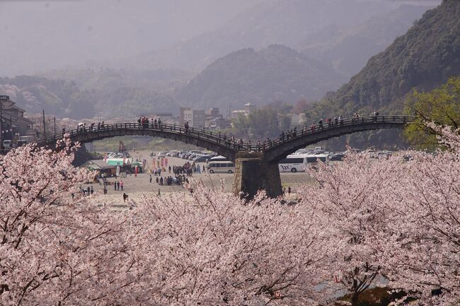7年に一度の岩国・行波の神舞。そして中国地方を代表する桜の名所、錦帯橋と安芸の宮島。