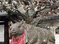 京の週末 そうだ、天神さんへ梅を見に行こう 北野天満宮梅苑