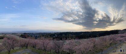 箕郷梅林、花と空と夕暮れ。