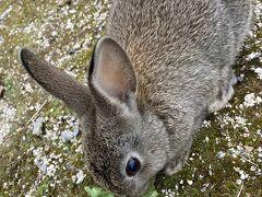 ウサギに会いに広島へ