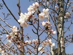 2015年3月 京都お花見&食べまくりウォーキング