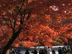 2020年11月 GOTOで行く京都 紅葉の旅その2 京都市内をサイクリング 坂道が多く電動にすれば良かったと思いながらもあちこち回りました