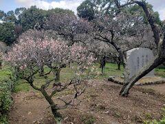 母・弟と行く梅の終わりの道明寺天満宮~神楽も拝見できました(=゚ω゚)ノ