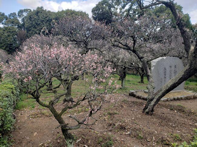 梅の花が大好きな私。今年は、毎年行く菅原天満宮の梅の時期を逃して残念がっていたら、弟が車で道明寺天満宮につれてってくれました。<br /><br />ネットで調べたら、咲き終わりになってたので、人も少ないだろうと久々の大阪の神社です(#^.^#)<br /><br />