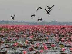 タイ東北地方の睡蓮の湖と歴史公園