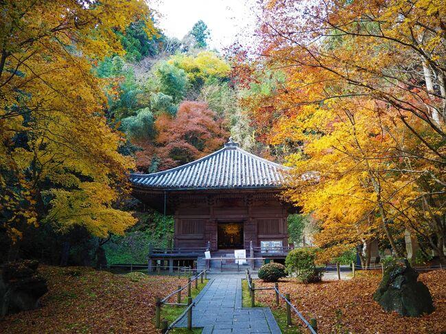 今年はコロナの影響で電車で行く南関東や関西方面への移動が難しく、イルミネーションの時期も東京へは出かけられないので、<br />宮城県のやくらいガーデン『星あかり~キャンドルの灯び~』を見に出かけました。<br />そのまま帰るのももったいないので、松島に寄ってお昼を食べ、もう散ってると思った円通院なども紅葉や黄葉が残ってて、思いがけず楽しめました<br />