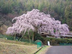 堀池の枝垂れ桜と園芸センターへ