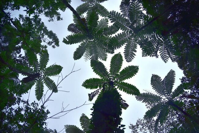 子どもの頃に読んだ椋鳩十さんの作品<br />それからずっと行ってみたかった奄美大島<br />奄美は夏のイメージですが、<br />あえて観光客が少ない冬旅を計画<br /><br />ところがその冬旅、あいにくの雨模様<br />でも、雨もいいものです。<br />金作原原生林は、雨の恵みでいっそう美しく輝いて、<br />私を魅了しました。<br /><br />ちょこっと 奄美特産グルメを満喫<br />ちょこっと シュノーケリングも
