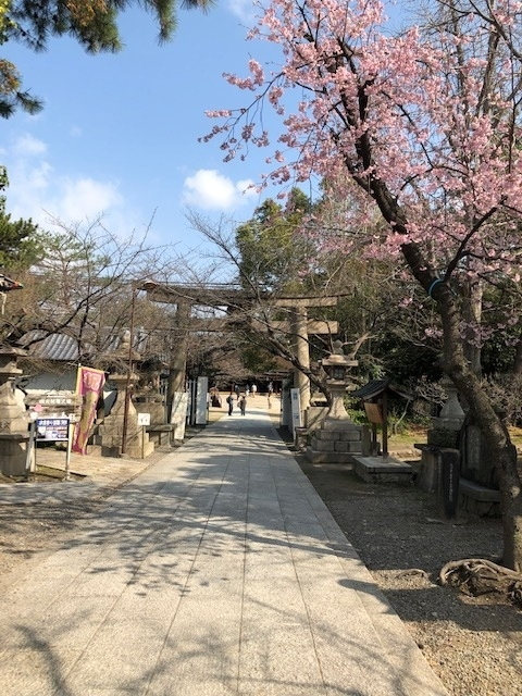 近鉄南大阪線道明寺駅から古市駅まで2019年に世界遺産登録された百舌鳥・古市古墳群の古市古墳群北コースを歩いて巡ります。